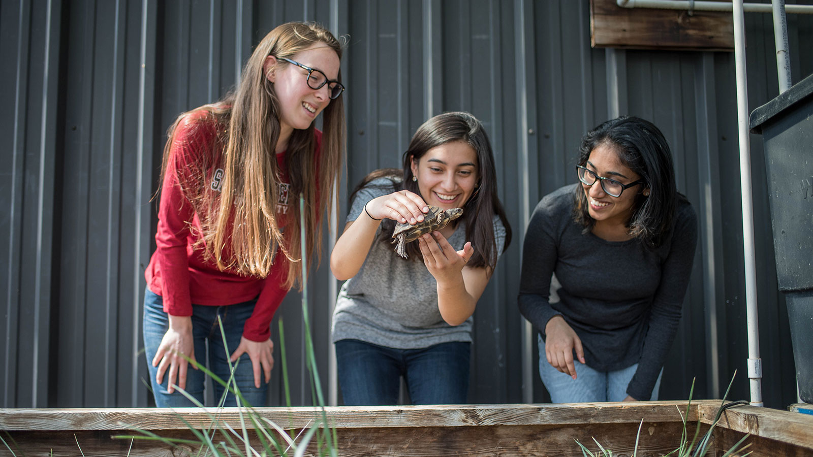 three SJU students with a turtle in the greenhouse
